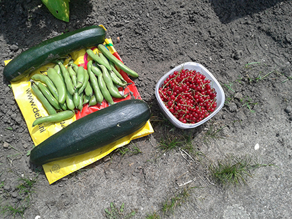 oogst