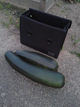 courgettes enorm