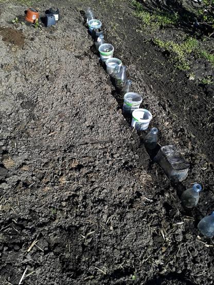 tuinbonen op een rijtje