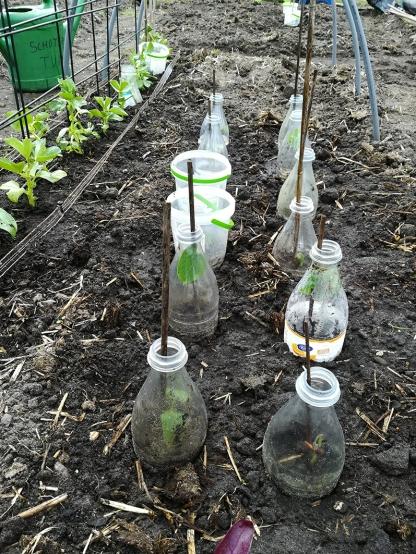 Sperziebonen in flesjes
