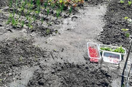 De oogst